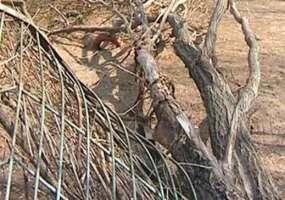 В Татарстане дерево убило мужчину