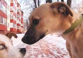 Нижнекамские зоозащитники просят 1,3 млн рублей, выделенных на отстрел животных, направить на создание приюта