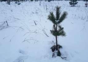 Стала известна цена самой дешевой новогодней елки в Нижнекамске