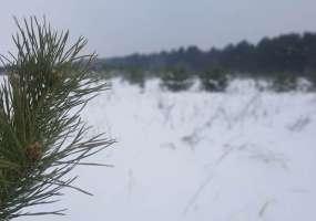В Нижнекамске около пяти градусов мороза и пасмурно