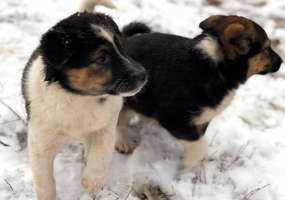 В России принят закон об обращении с животными