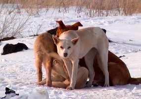 В Нижнекамске, несмотря на принятый закон о защите животных, продолжат убивать бродячих собак
