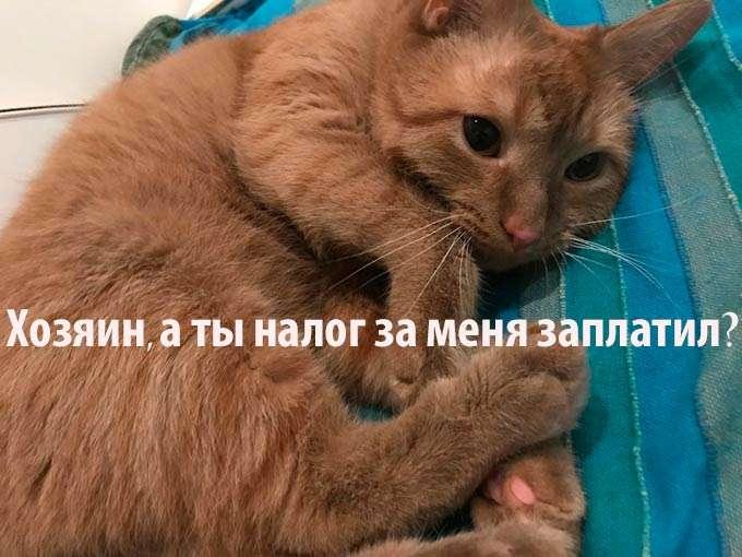 В России планируют ввести обязательную регистрацию животных