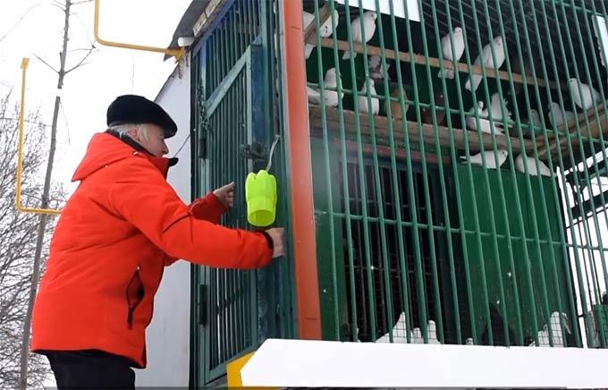 В День влюбленных в Нижнекамске сняли ролик «Любовь и голуби по-нижнекамски»