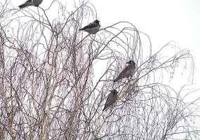 В Нижнекамске устанавливают отпугиватели птиц