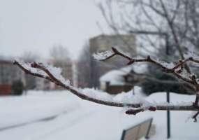 В Нижнекамске ожидается метель с мокрым снегом и потепление до +1