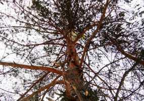 В Нижнекамске беличье гайно перенесли с новогодней елки на сосну