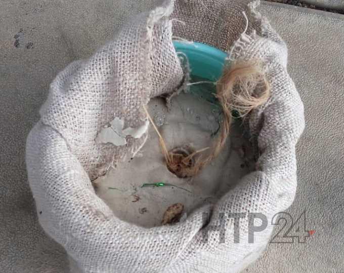 Выяснилось, что было найдено на территории школы №36 в Нижнекамске, откуда эвакуировали детей
