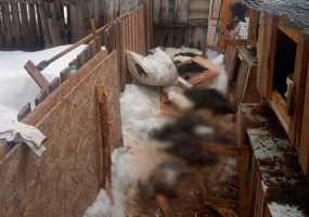 В Татарстане при загадочных обстоятельствах погибли кролики