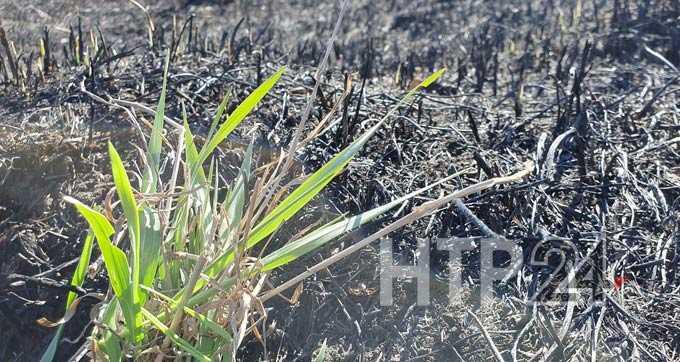 В Нижнекамском районе в воскресенье произошло 8 возгораний