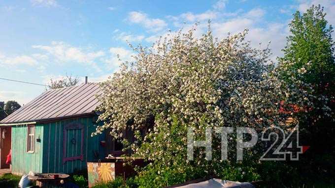 В Нижнекамске на следующей неделе начнут курсировать автобусы в сады-огороды