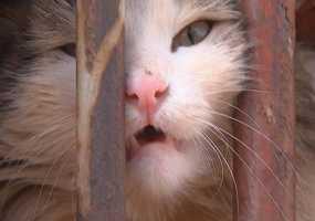 Нижнекамские журналисты спасли кошку из недельного заточения