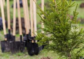 Татарстанцы высадят почти 2,8 млн молодых деревьев в День посадки леса