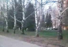 Нижнекамцы заметили гуляющих в центре города лосей