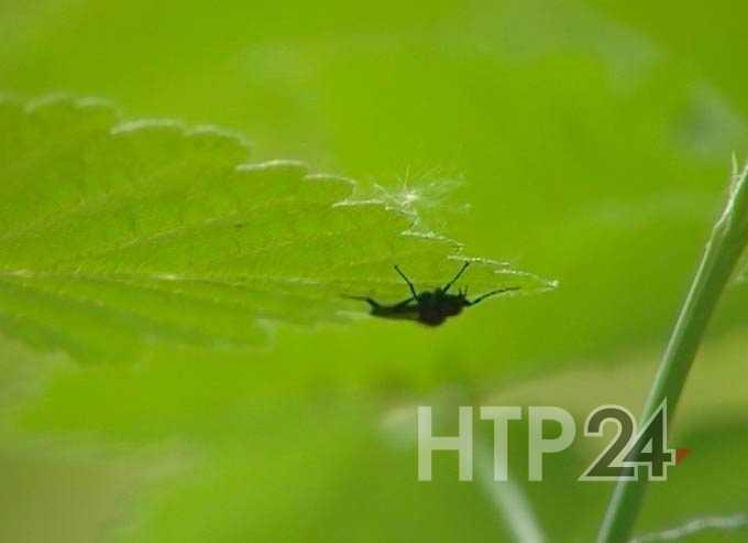 В Нижнекамске растет число жертв от укусов клещей