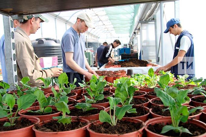 Маркировка по ГОСТу и сертификаты соответствия: специалисты Россельхознадзора рассказали, как выбрать качественные семена и посадочный материал