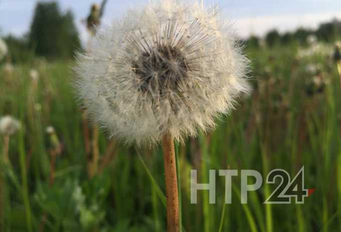 В Нижнекамске 22 градуса тепла, синоптики обещают дождь с грозой и ветром