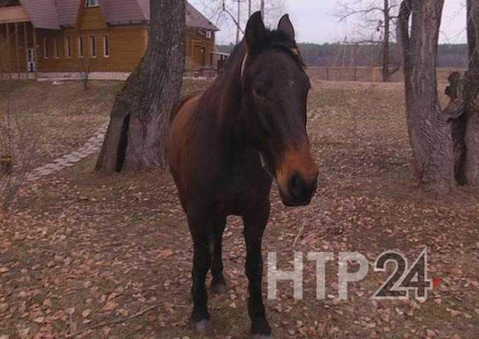 При продаже коня житель Нижнекамского района лишился крупной суммы денег