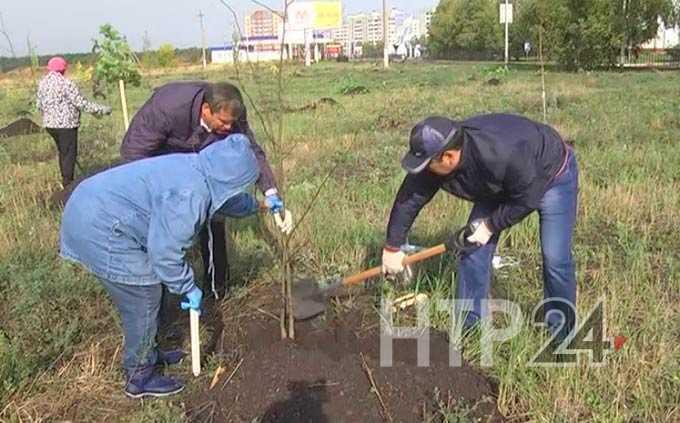 В Нижнекамском районе весной высажено около 8 тыс деревьев и кустарников