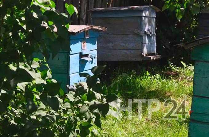 В Нижнекамском районе агрессивные пчелы нападают на людей