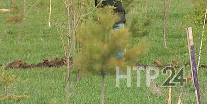 В Татарстане при загадочных обстоятельствах исчезла яблоневая аллея