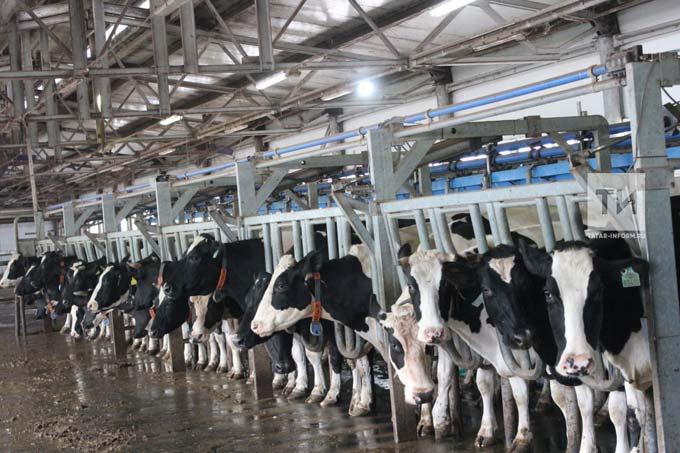 В Татарстане впервые было произведено более 4 тыс. тонн молока в сутки