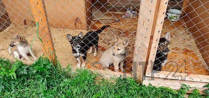 В Нижнекамске рассматривают вопрос строительства приюта для бездомных животных