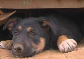 Маленькая собачка спасла новорожденную девочку, которую выбросили в парке