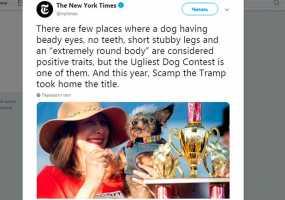 Самой уродливой собакой в мире стал 15-летний беспородный пес