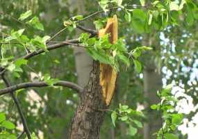 В Татарстане ожидается шквалистый ветер, град и ливни