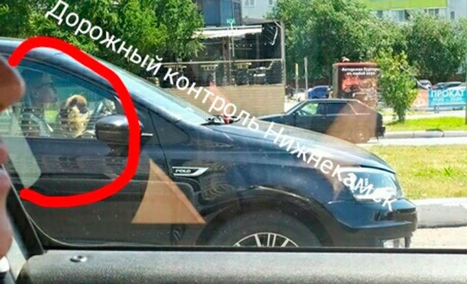 Нижнекамские автовладельцы обсуждают автоледи с собачкой за рулем