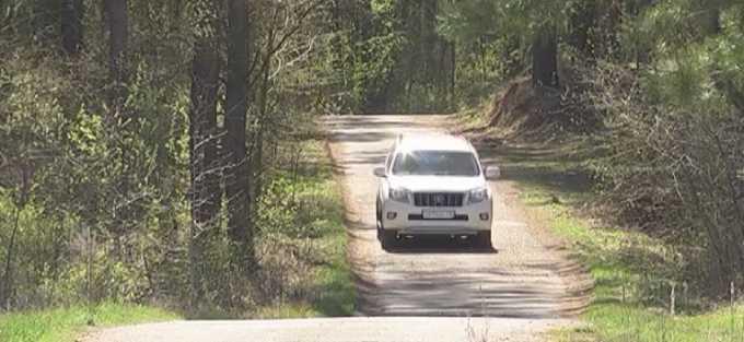 Медведя обвинили в угоне автомобиля и дорожно-транспортном происшествии