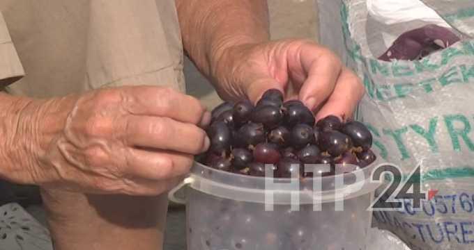 Диетологи назвали самые полезные для человека ягоды