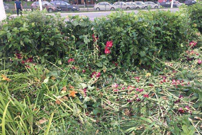 В Нижнекамске старший по дому разорил цветники, которые разбили жильцы