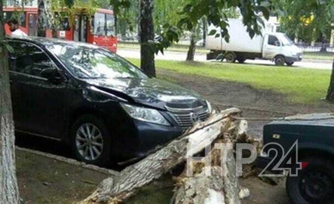 В Нижнекамске старая береза упала на машину
