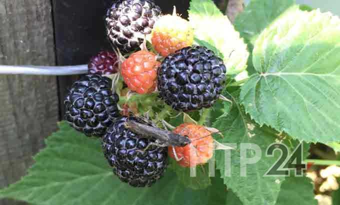 Россиянам ограничили вывоз фруктов из-за границы