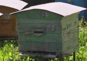 Названа причина массовой гибели пчел