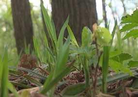 В Нижнекамске проведут повторную обработку лесов против насекомых