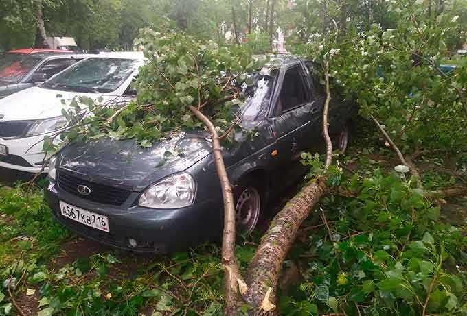В Нижнекамске сильный ветер повалил деревья и ветви на машины