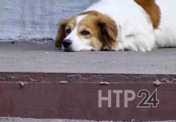 В Интернете петицию о строительстве приюта для животных в Нижнекамске поддержали уже 1,5 тыс человек