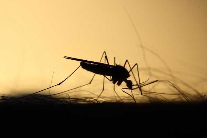 На кого чаще всего нападают комары и как с ними бороться