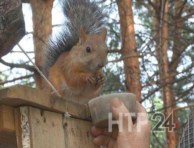В нижнекамский парк привезли 10 белок взамен отравившихся при дератизации от мышей