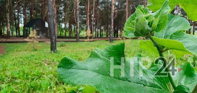 В Нижнекамск возвращается долгожданное августовское тепло