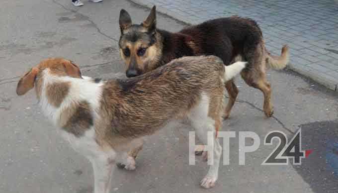 Нижнекамск присоединился к Всемирному дню бездомных животных