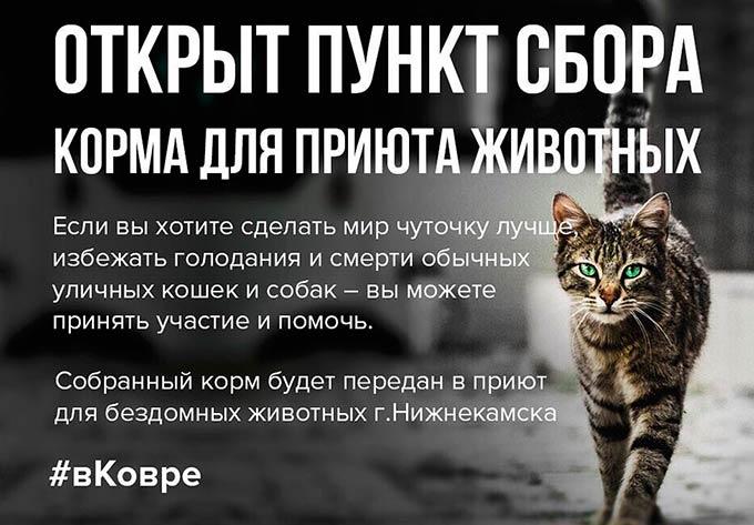 В Нижнекамске стартовала акция в помощь бездомным животным