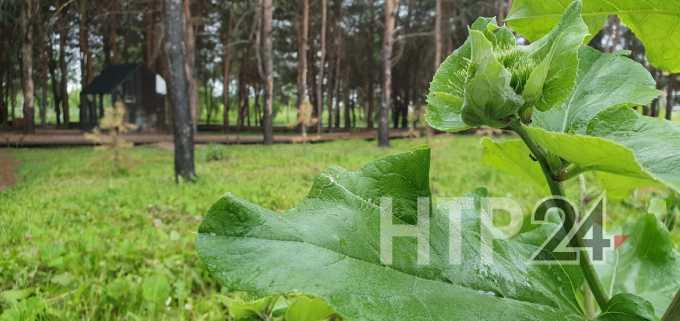 Летняя жара в Татарстане продержится всего несколько дней