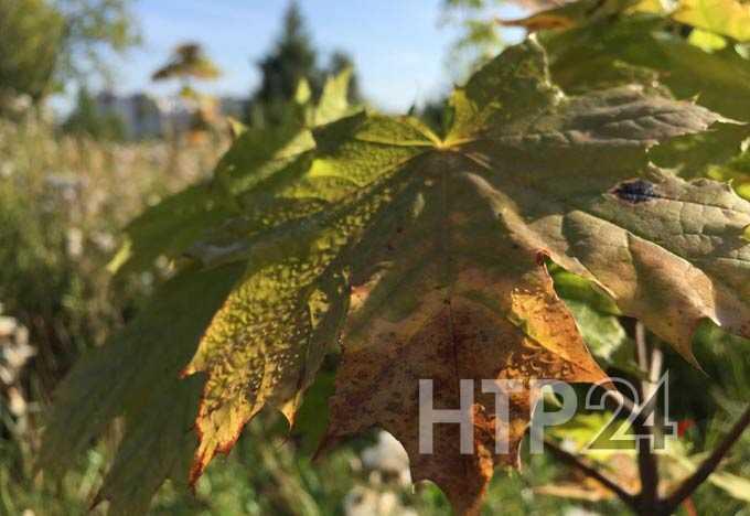 В Нижнекамске +21 и ясно, ожидается солнечная и теплая погода
