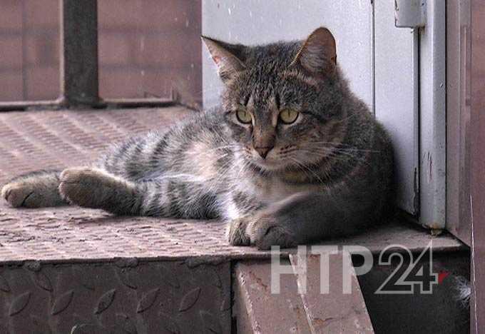 «Привезли 40 кошек, кормить нечем» - в Нижнекамске хозяева приюта умоляют о помощи