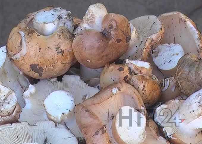 Около Нижнекамска в лесу потерялись мать с пятилетней дочерью, которые пошли за грибами