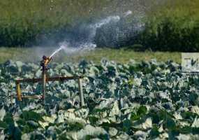 В Татарстане запустили новый проект «Агростартап» по грантовой поддержке начинающих фермеров
